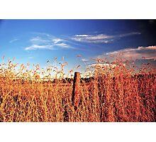 Super Colors Photographic Print