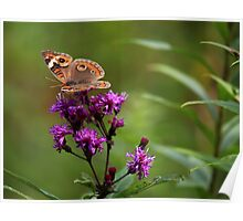 Spotted Butterfly on Purple Flower Poster