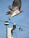 Sudden Take-Off from Power Pole by Deb Fedeler
