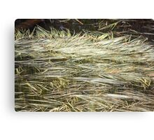 Montana Pond Reeds Canvas Print