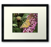 Painted Lady - Butterfly on Buddleia Framed Print