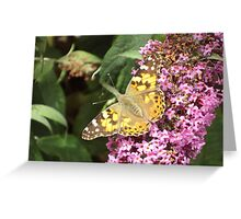 Painted Lady - Butterfly on Buddleia Greeting Card