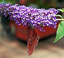 Butterfly Irony by Kenric A. Prescott