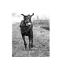 Large Dog Running Photographic Print