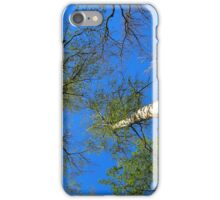 Birch trees on the background of the spring sky iPhone Case/Skin