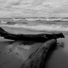 Driftwood and Surf by jrier