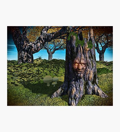 Old Man Of The Wood Photographic Print