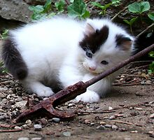 Barn Kitten II by Tony Wilder