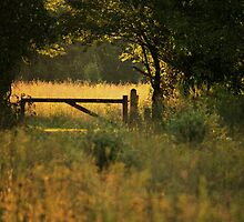 Enter By The Gate by Kelly Chiara