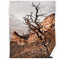Lifeless Mesa Verde Poster