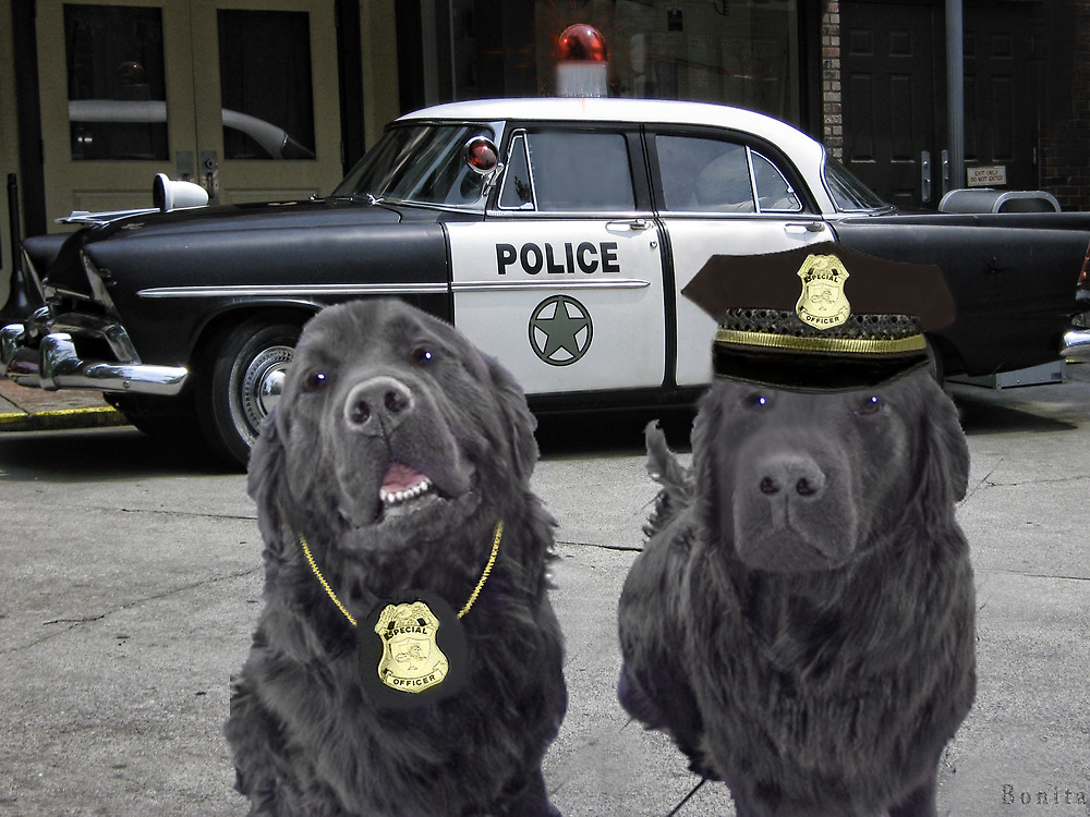 "☞ º°""˜`""°☜♥☞CANINE POLICE DOGS- BAD BOYS THEME TAKEN FROM THEME SONG ☞ º°""˜`""°☜♥☞ by ✿✿ Bonita ✿✿ ђєℓℓσ"