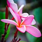 The Plumeria by Eddie Yerkish