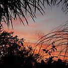 San Diego Sunset by Rozalia Toth