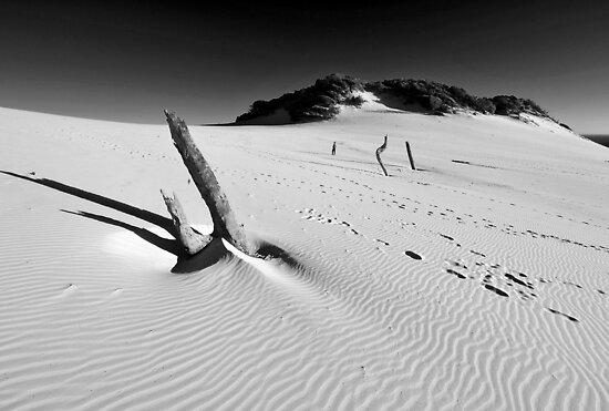 Carlo Sandblow. Rainbow Beach, Queensland, Australia. (3) by Ralph de Zilva