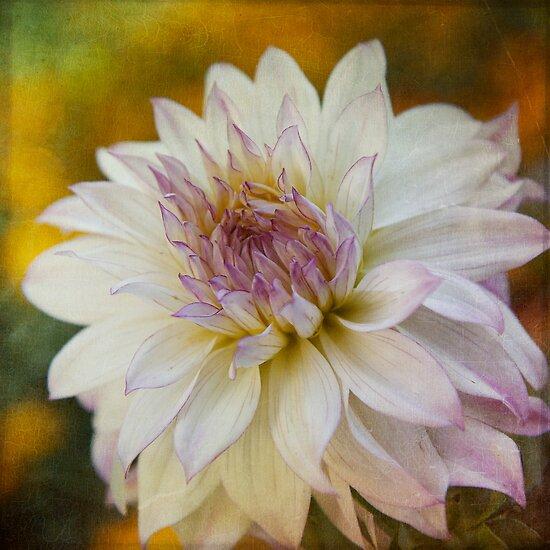 Touch of Lavender by Lynn Starner