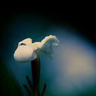 Ghostly dawn garden flower by pikeypaddy