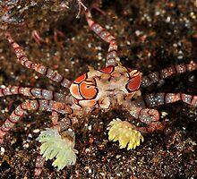 Boxer Crab by MattTworkowski