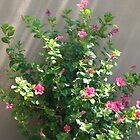 Hibiscus original by Rozalia Toth
