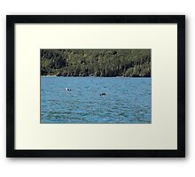 Northern Sea Otters Framed Print