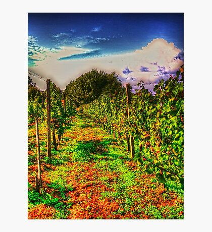 autumn vineyard Photographic Print