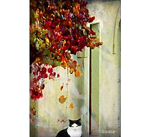 Autumn dreaming Photographic Print