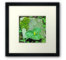 Trillium luteum Framed Print