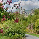 Glimpsing Biltmore by Marilyn Cornwell