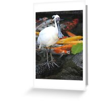 Spoonbill and Koi Greeting Card