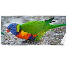 Bird Profile Poster
