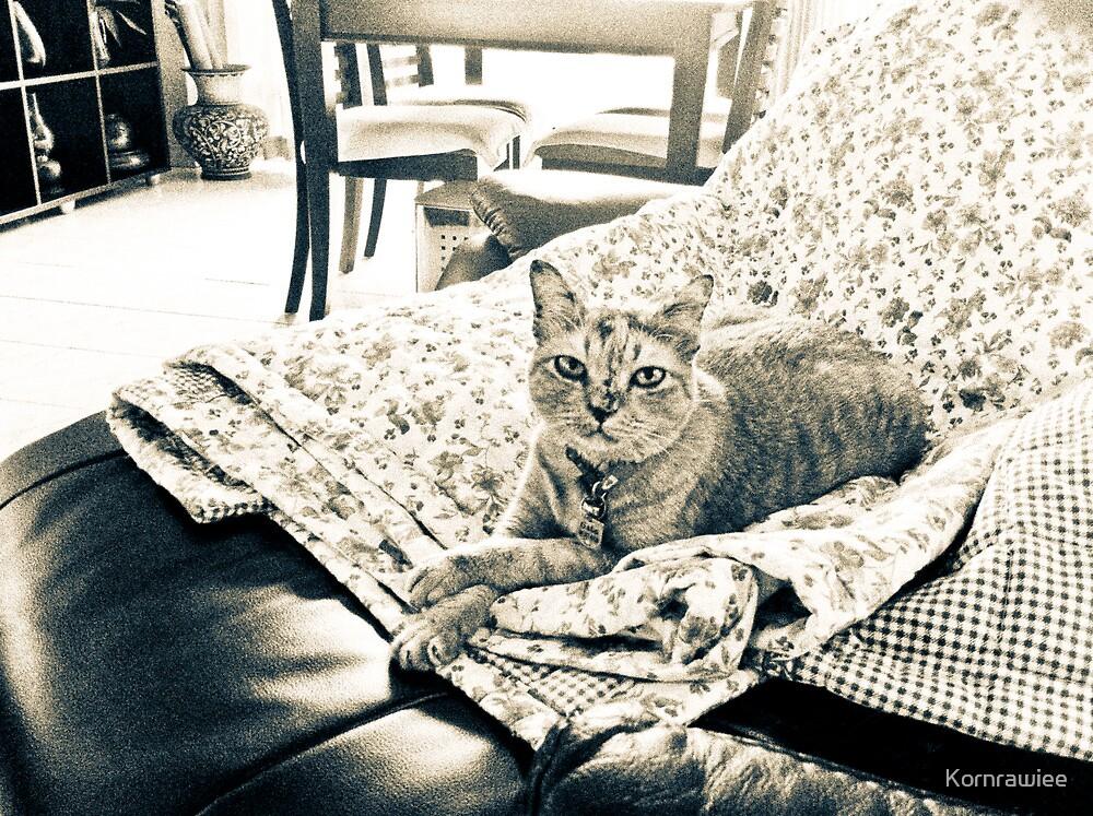Meow said, here is my sweet home... by Kornrawiee