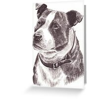 Staffordshire Bull Terrier in Pencil Greeting Card