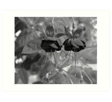 Fuchsia in mono Art Print