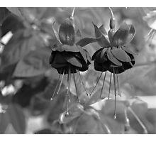 Fuchsia in mono Photographic Print