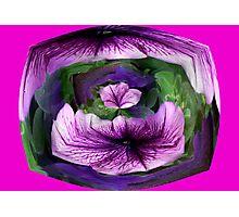 Petunia #1 Photographic Print