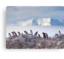 The Creche (Gentoo Penguins, Port Lockroy, Antarctica) Canvas Print