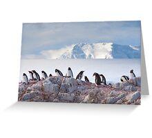 The Creche (Gentoo Penguins, Port Lockroy, Antarctica) Greeting Card