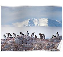 The Creche (Gentoo Penguins, Port Lockroy, Antarctica) Poster