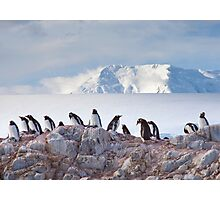 The Creche (Gentoo Penguins, Port Lockroy, Antarctica) Photographic Print