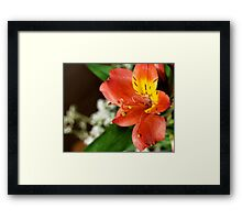 Radiant in Red - Bundle of Blossoms Framed Print