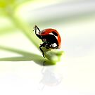 Ladybird Yoga. by Neil Clarke