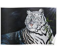 Baroda the Royal white Tiger Poster