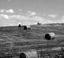 On the farm by Mechelep