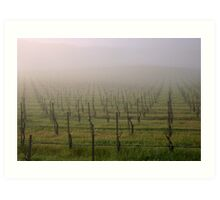 Morning Vineyard  Art Print
