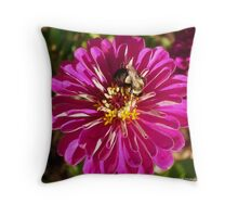 Bumble Bee Feeding Throw Pillow