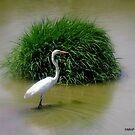 Egret.... by Mechelep