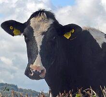 Good Morning Cow....Devon UK by lynn carter