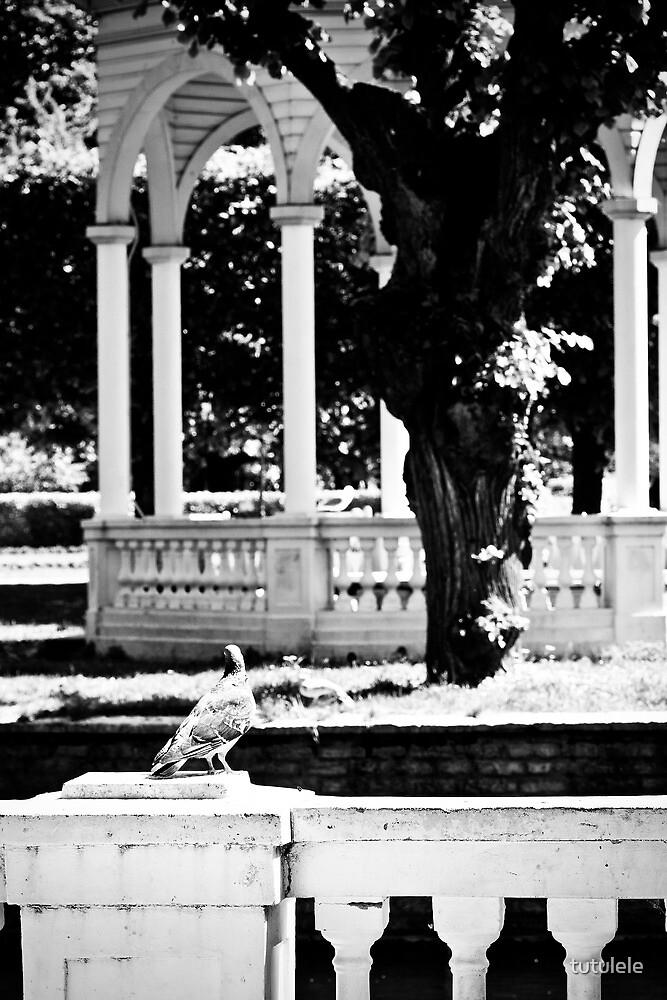 Kadriorg. The Bird. by tutulele