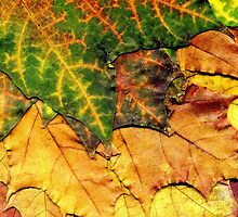 Detailed Fall Maple Leaf Texture by AnnArtshock