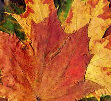 Detailed Fall Maple Leaf Texture 2 by AnnArtshock