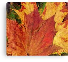 Detailed Fall Maple Leaf Texture 2 Canvas Print